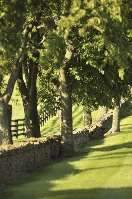 Lovely stone walls and rows of trees