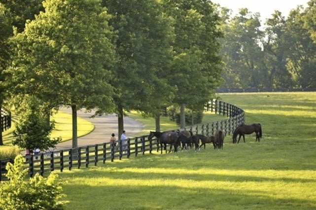 Thoroughbreds grazing peacefully.