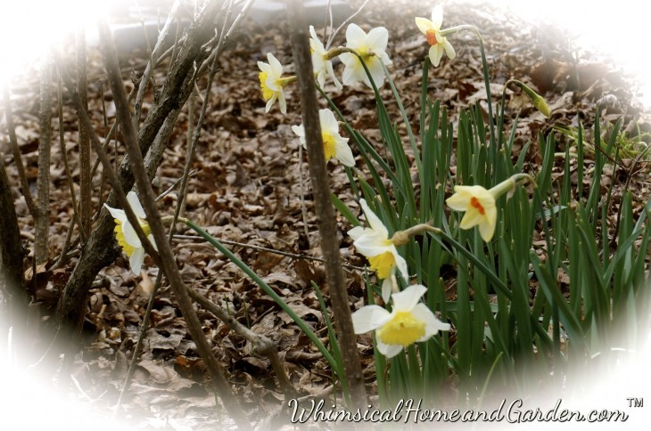 The brown all around gives way to flowers and grass and trees blooming......