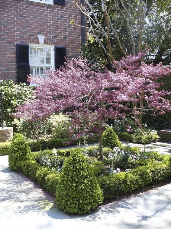 What style of garden do you favor for Japanese trees for small gardens
