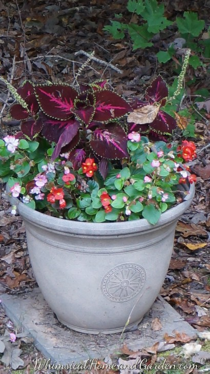 I have 5 of these same pots in a back garden. You can't see it, but there is a small hosta in the center. That stayed, but the begonias and coleus got pulled in all 5 pots. It is hard to do, but I can't do everything after a hard frost, so I work around little by little. This is a different kind of gardening year for sure. Normally all the gardens would pretty much be put to bed for the winter by now.
