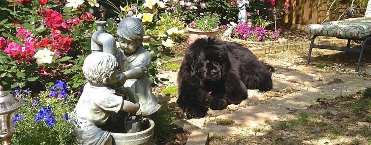 Luci in the Garden…..