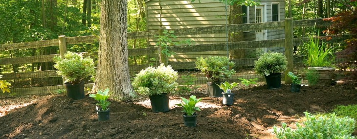 Creating the New Red Maple Tree Pocket Garden- Part I