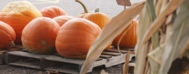 Pumpkins and Mums, Oh My!