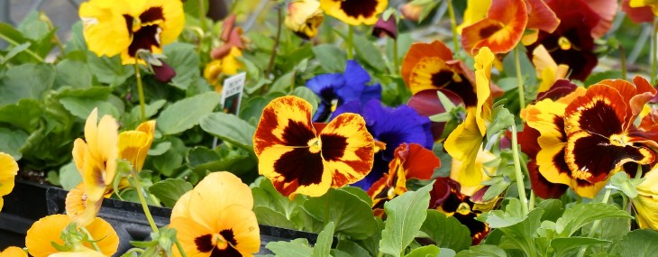 Plants & Flowers for Autumn and Winter