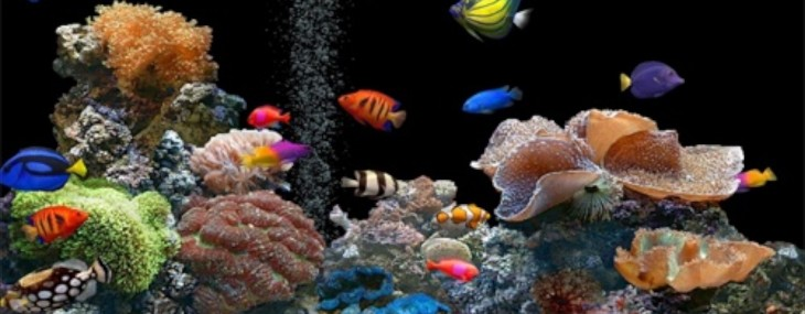 Aquariums & Decor